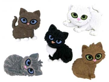 Katzen mit großen Augen